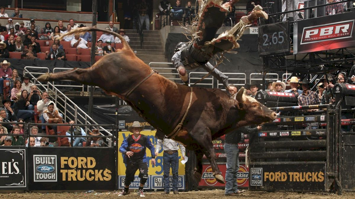 Man vs  Beast: PBR Finals Right Around the Corner