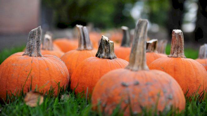 13 A Capella Halloween Tunes, Featuring Pentatonix, 'Thriller,' & More