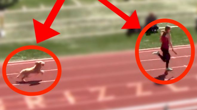Dog Runs Down Leader And Wins Track Race!