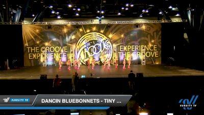 Dancin Bluebonnets - Tiny Jazz [2019 Tiny - Jazz Day 1] 2019 Encore Championships Houston D1 D2
