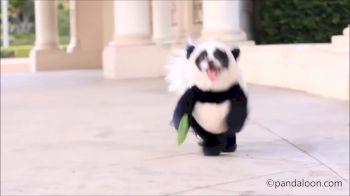 Puppy in a Panda Costume